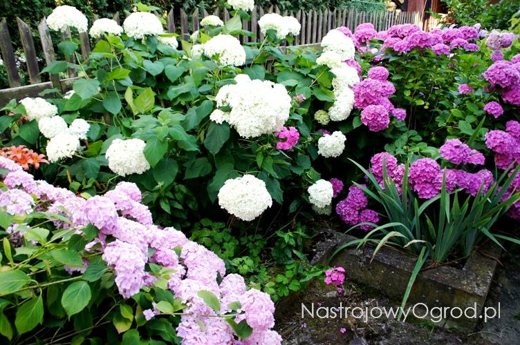 kwiaty-ogrodowe-wieloletnie-9