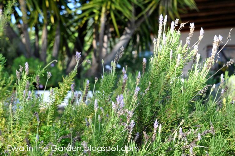 kwiaty-w-ogrodzie-10