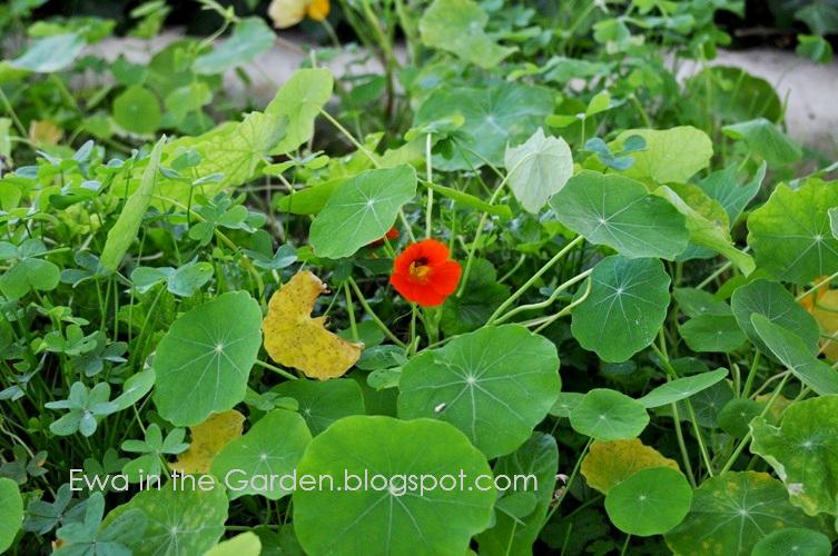 kwiaty-w-ogrodzie-12