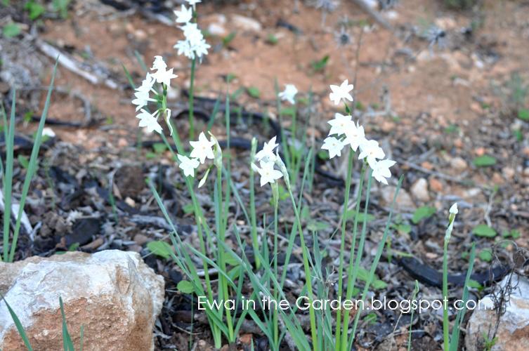 kwiaty-w-ogrodzie-15