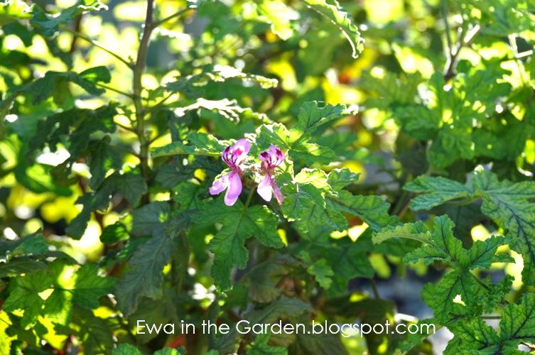 kwiaty-w-ogrodzie-19