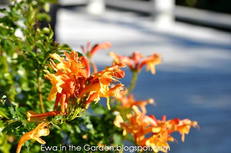 kwiaty-w-ogrodzie-4