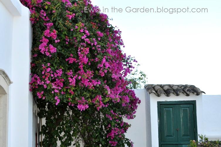 kwiaty-w-ogrodzie-5