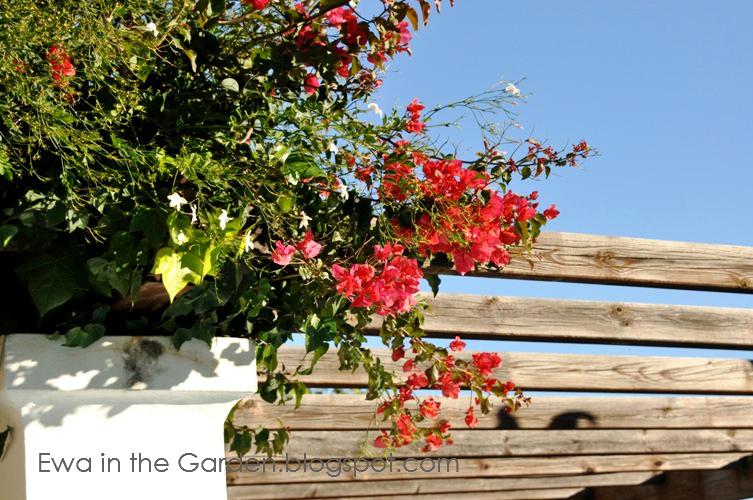 kwiaty-w-ogrodzie-6