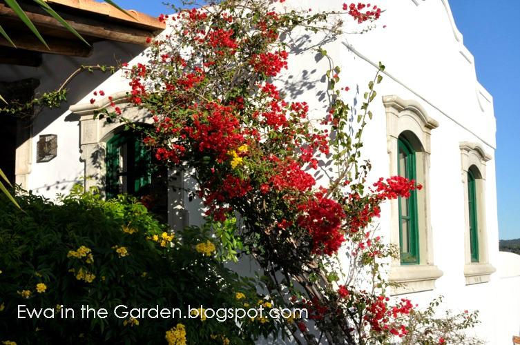 kwiaty-w-ogrodzie-7