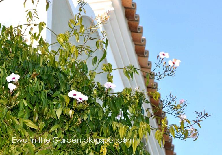 kwiaty-w-ogrodzie-8