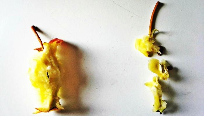 jak-prawidlowo-jesc-jablko-4