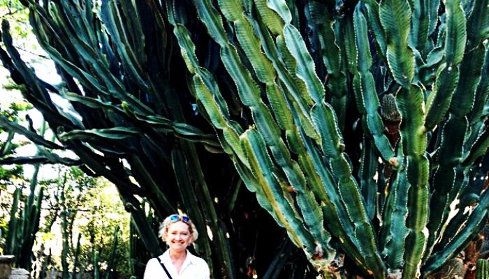 nastrojowy-ogrod-kaktusowy