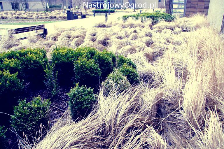 ogród-trawy-1