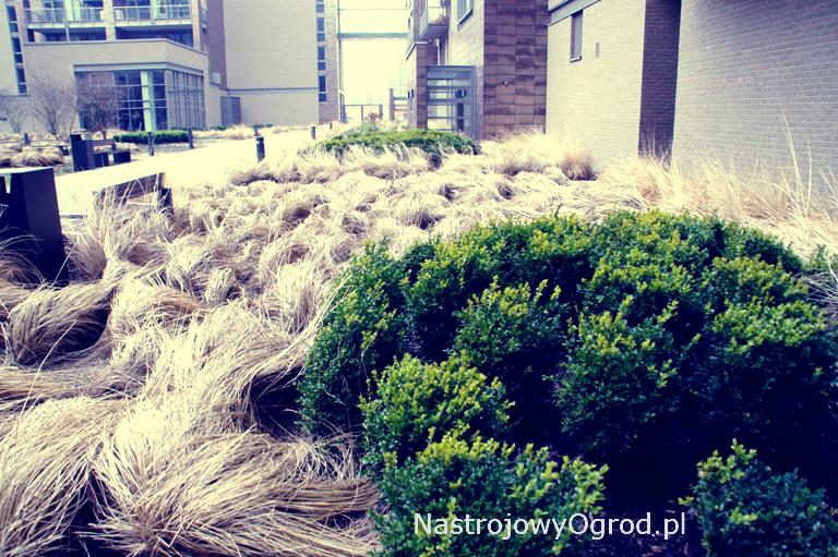 ogród-trawy-4