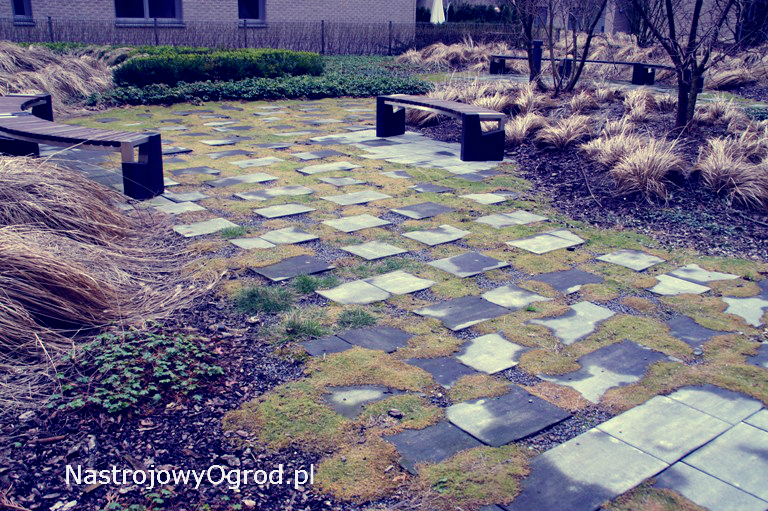 ogród-trawy-5