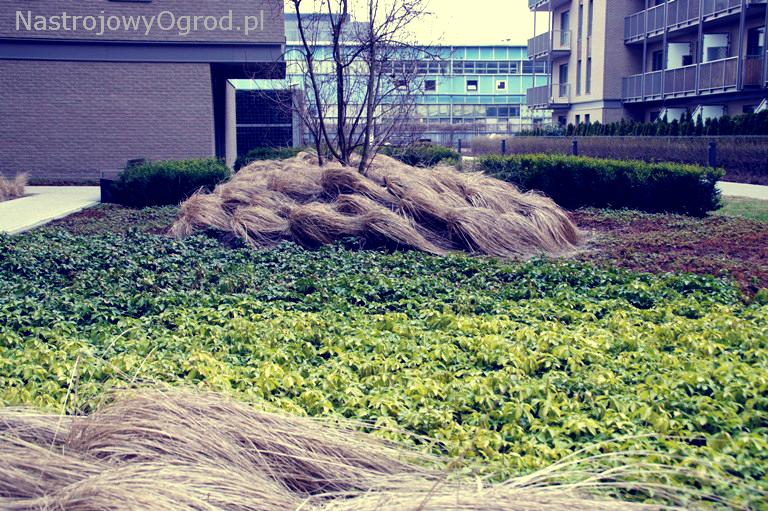 ogród-trawy-6